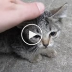 Guy Found Two Abandoned Kittens In His Yard. What Happens Next Is Heartwarming !