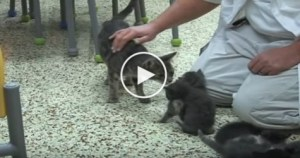 Wonderful Kitties Reunited With Abused Mom Cat. Heartwarming Video !