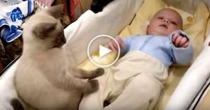 Wonderful Kitty Calming Down This Cute Baby. Heartwarming Video !