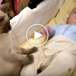 Wonderful Kitty Calming Down This Cute Baby. Heartwarming Video !