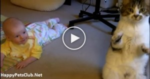 What This Cat Does When She Noticed The Baby Is Incredible