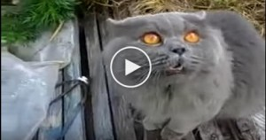 Hilarious Cat`s Reaction When Her Human Said That is Enough Playing For Today