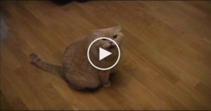 Smart Cat Singing With Her Human. Unbelievable Video !