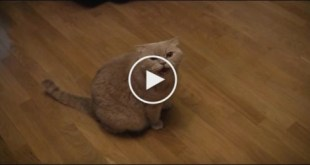 Smart Cat Singing Russian Song With Her Human. Unbelievable Video !