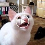 Cat Speaking in Unknown Alien Language. Incredible Video !