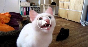 Cat Speaks in Unknown Alien Language. Incredible Video !