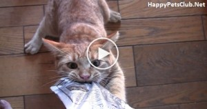 This Cat Easily Turns Into Treat Monster. I Couldn`t Believe My Eyes