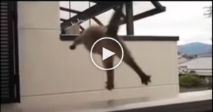 Fat Cat Tries To Jump, But…. The Biggest Fail EVER ! Hilarious Video !