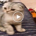 He Shoots An Imaginary Bullet To His Kitty. What Happens Next is Hilarious!