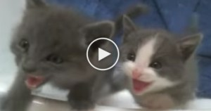You Have to See The Cutest Kitten Chorus. Amazing Rescued Kitties.