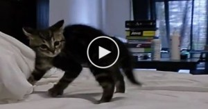 This Adorable Kitten Shows The Crazy Crab Dance. Must Watch