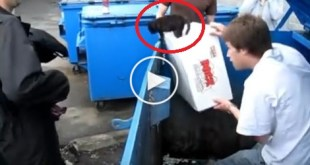 They Rescued Helpless Kitten Left Alone In the Dumpster