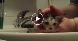 Rescued Abandoned Kitten Enjoying First Bath. Heartwarming Video !