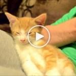 Sleepiest Kitten Ever Will Melt Your Heart. Cuteness Overloaded.