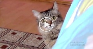 This Kitty Is Clearly Planning Something Evil. Watch Till The End! SCARY !
