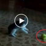 Little Cute Kitty Vs SCARY Thing. You Must See This !