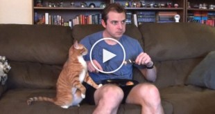 Eating With Kitties Around Is A Real Struggle. Hilarious Moments !