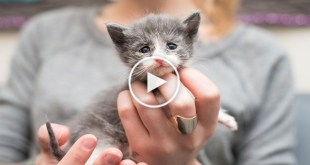 The Saddest Rescued Emaciated Kitten. Heartwarming Story.