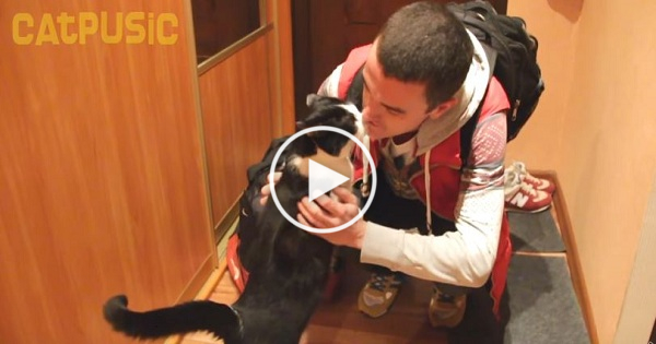 Cute Cat Greets Her Owner In The Cutest Way After Being Separated for 20 Long Days!