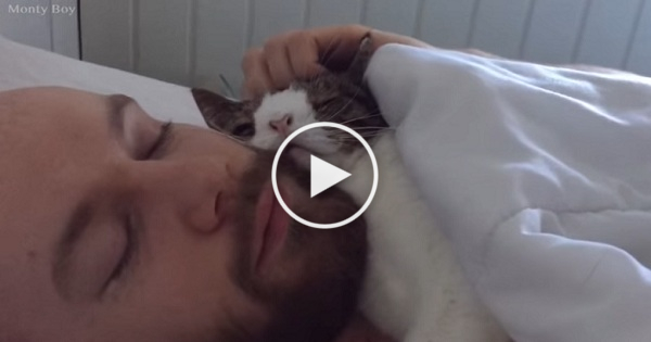 Guy Adopted This Strange-Looking Cat, But Watch Them Doing This Everyday !