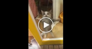 Kitty`s Cute Reaction To His Human Daddy Coming Home Is Simply Heartwarming