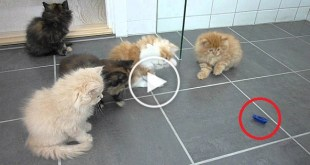 "Cute Kittens Noticed a ""Bug "" On The Floor. Their Reaction Is Priceless !"