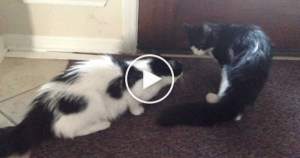 Kitty Lost For 1 Month Is Finally Reunited With His Brother. Breathtaking Video !