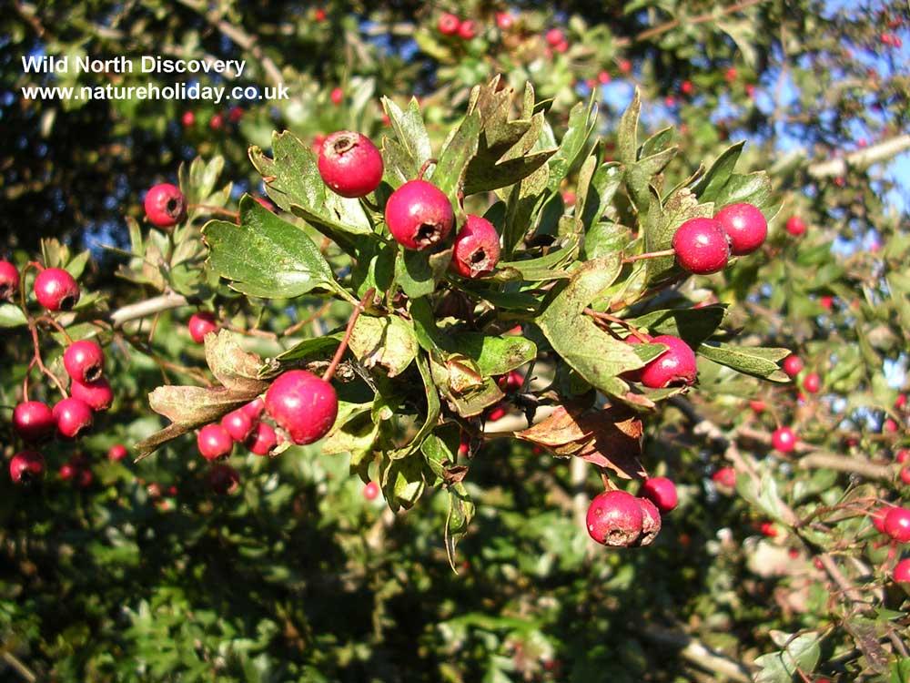 Autumn-foraging