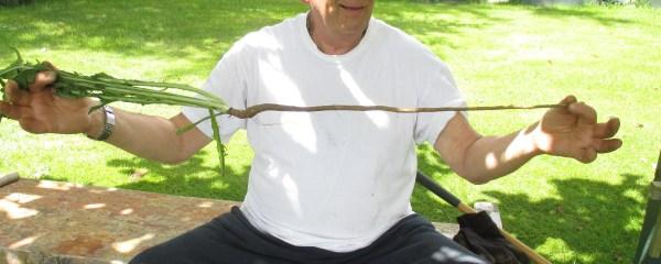 damaghosa holding dadelion