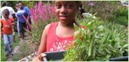 Participate in the 5th Annual Harlem Community Gardens Tour