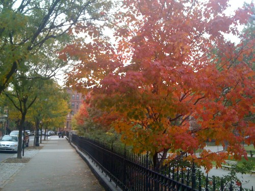 You Can Still Catch Glimpses of Fall In Harlem
