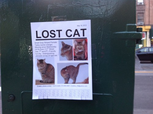 Missing Cat On Harlems Restaurant Row