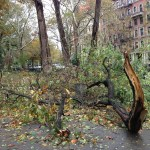 Hurricane Sandy Aftermath Upper Manhattan