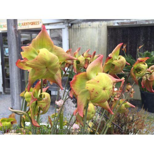 Medium Crop Of Carnivorous Plant Terrarium