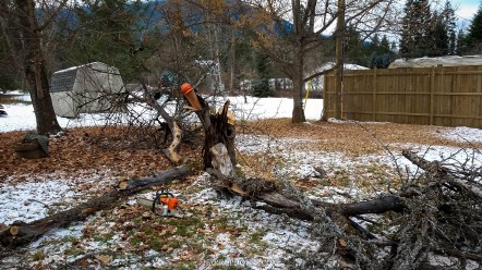 Unfortunately, the poor dead fruit tree had to come down