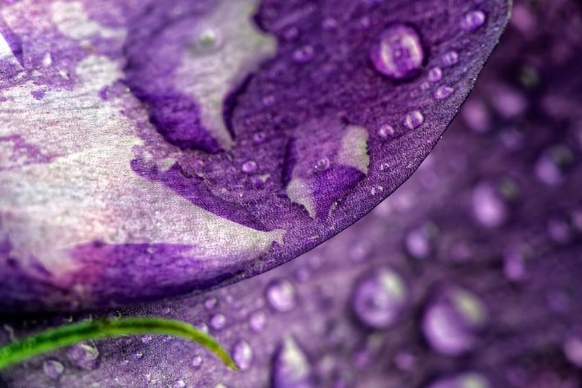 Cận cảnh các loài hoa đẹp lung linh