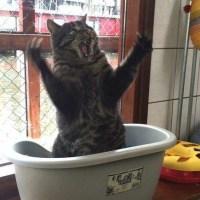 Kissasunnuntai! - Katso viihdyttävät kuvat!