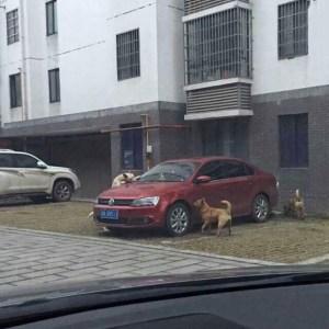 Autoilija potkaisi kulkukoiran sivuun – Et usko mitä koira teki kostoksi!