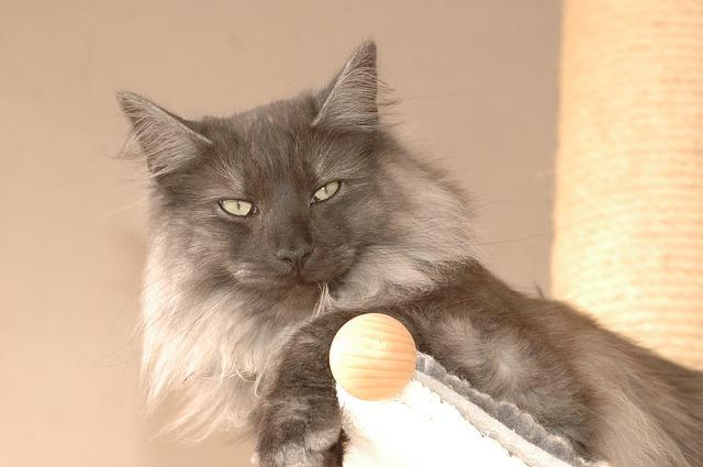 cat-1247278_640