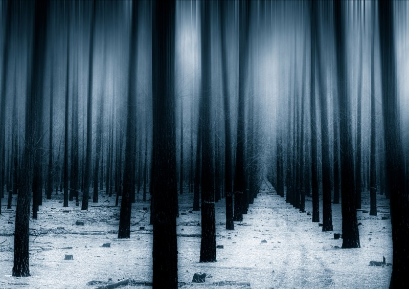 Large Of Dark Forest Wallpaper