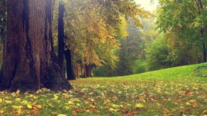 fall-nature-photography