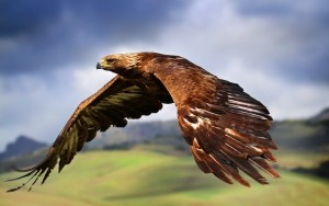 eagle_birds_predators_flight_wings_flap_53340_2880x1800