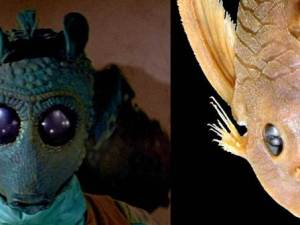 150318-science-greedo-catfish_2215c73dc941f2920ae8d6f426871b28.nbcnews-ux-800-360