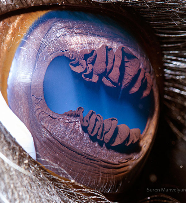 llama-close-up-of-eye-macro-suren-manvelyan