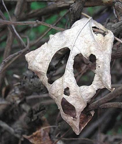 pareidolia_skull
