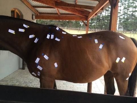 Equine Body Work
