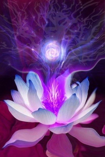 max_lotus