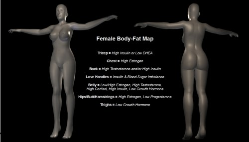 body fat map female woman Hormones, Problem Areas and Your Body Fat Map   Part 2