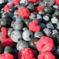 Berries Help To Clear Toxic Accumulations From The Brain And Improve Cognitive Function, Research Finds