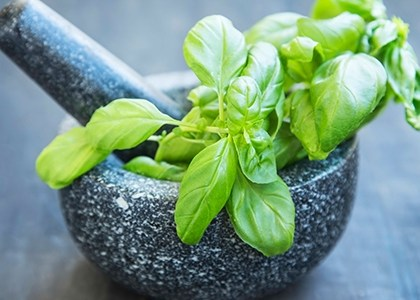 what-is-holy-basil